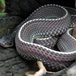 file-snake