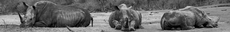 rhinobanner