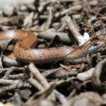 slug-eater