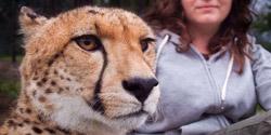 cheetahfamban