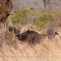 Buffalo, st lucia, mangrove walk