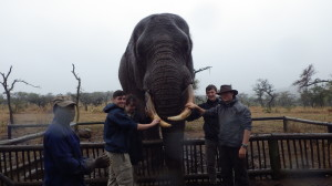 Elephant interaction_south_africa_cadets_student_groups1