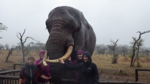 Elephant interaction_south_africa_cadets_student_groups2